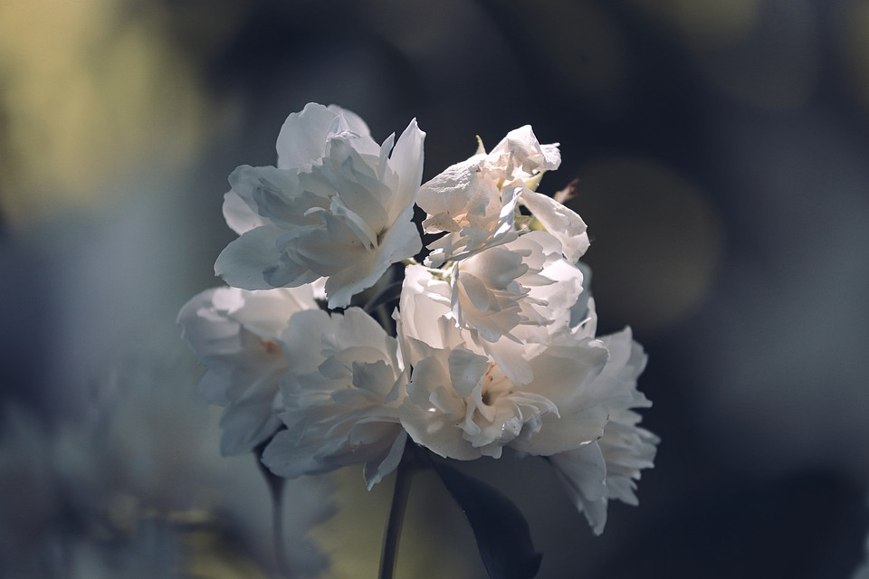 ทำไมงานศพถึงต้องใช้พวงหรีดดอกไม้สด