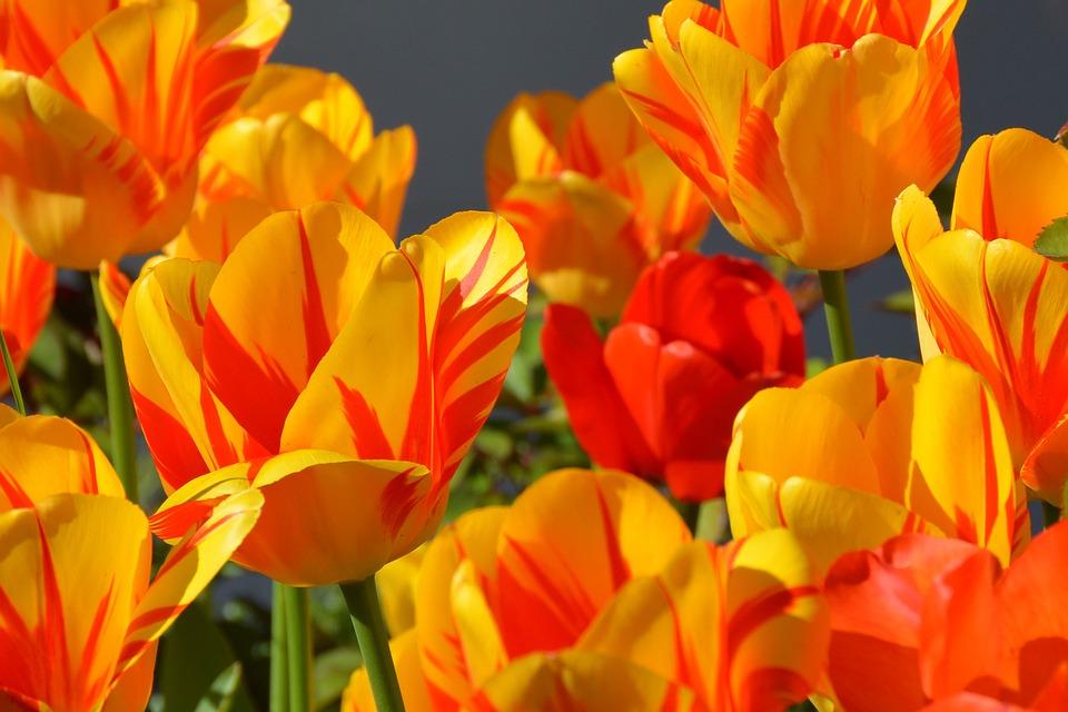 3ช่อดอกไม้แนะนำสำหรับงานรับปริญญา
