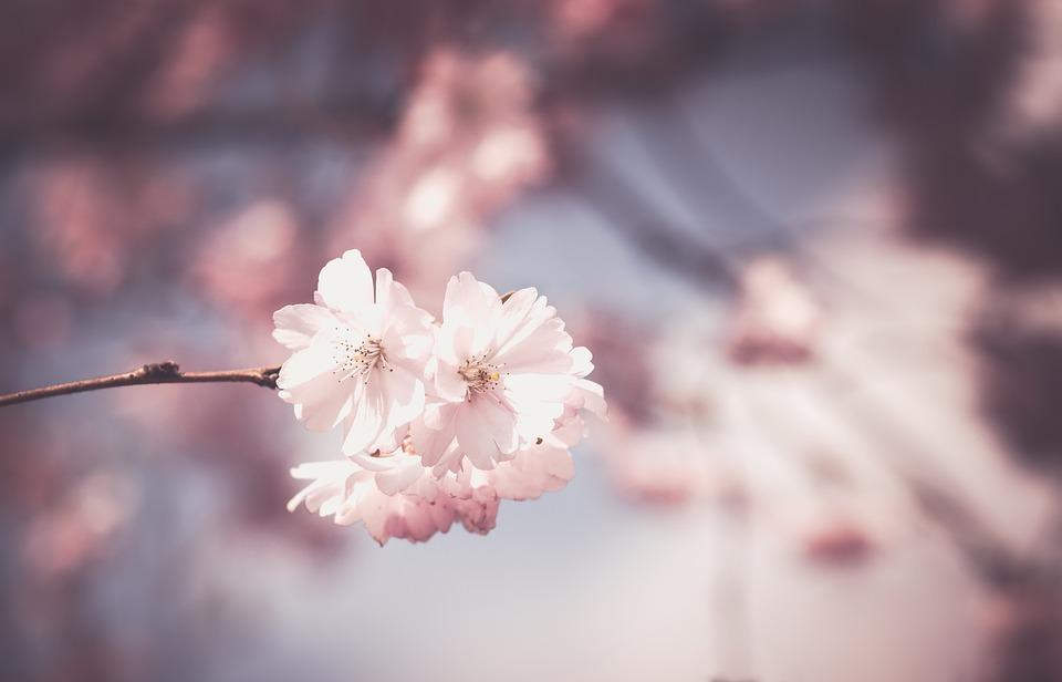ความเชื่อเรื่องพวงหรีดดอกไม้สด