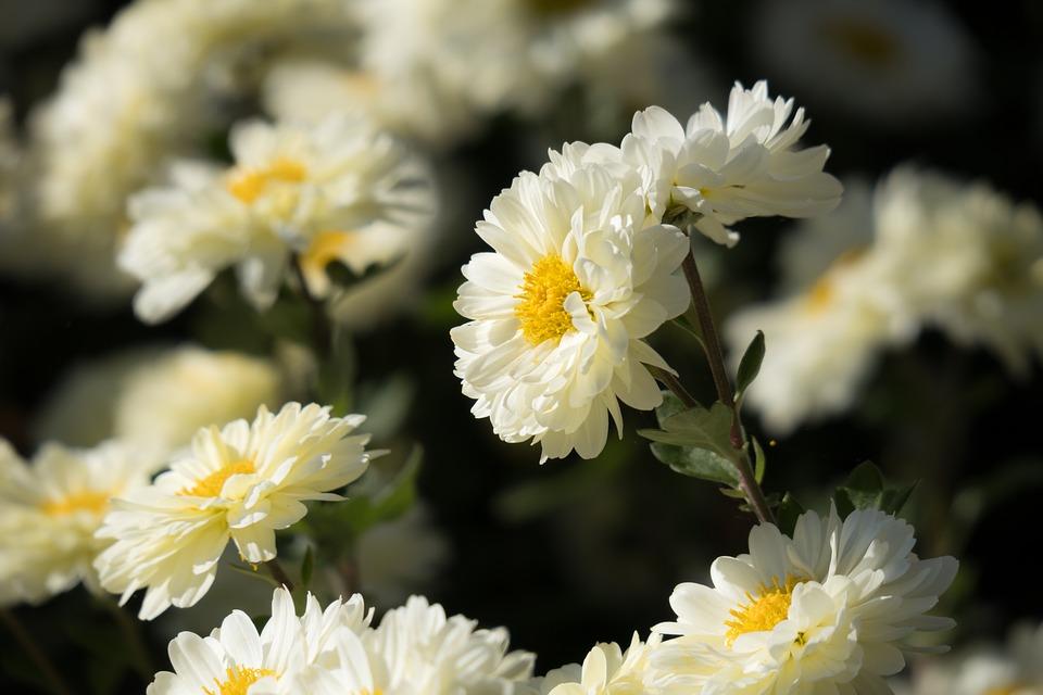 3เทคนิคเลือกพวงหรีดดอกไม้สด