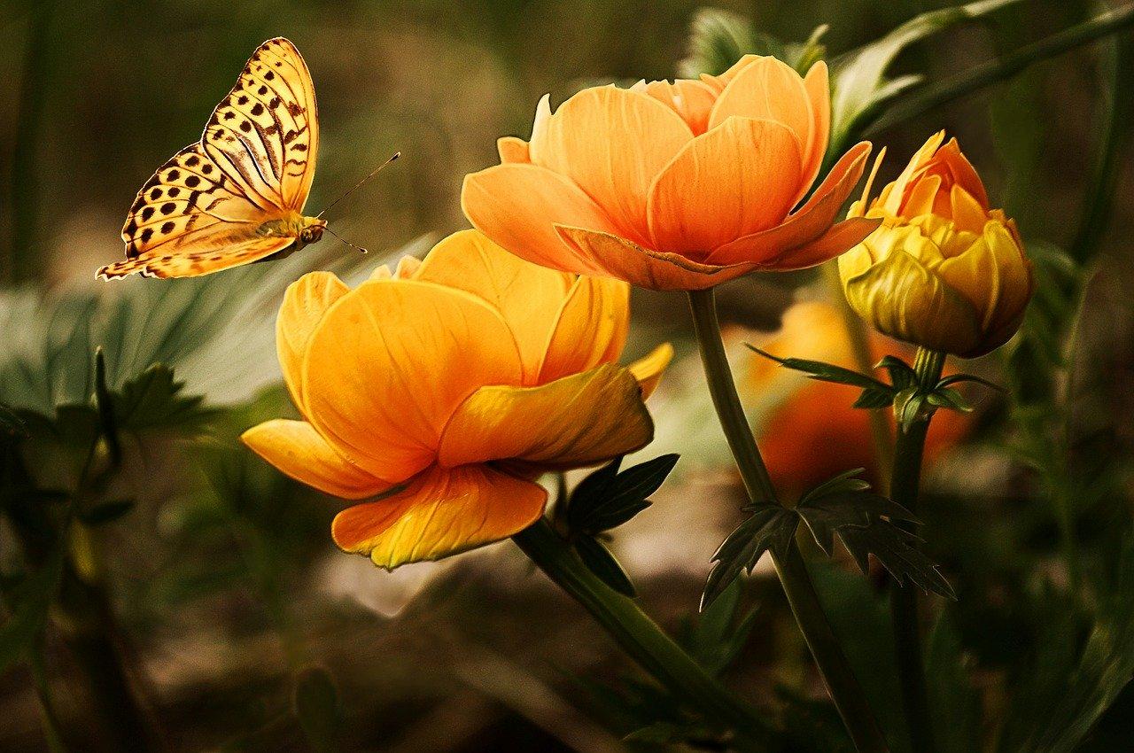 พวงหรีดดอกไม้สด พวงมาลา