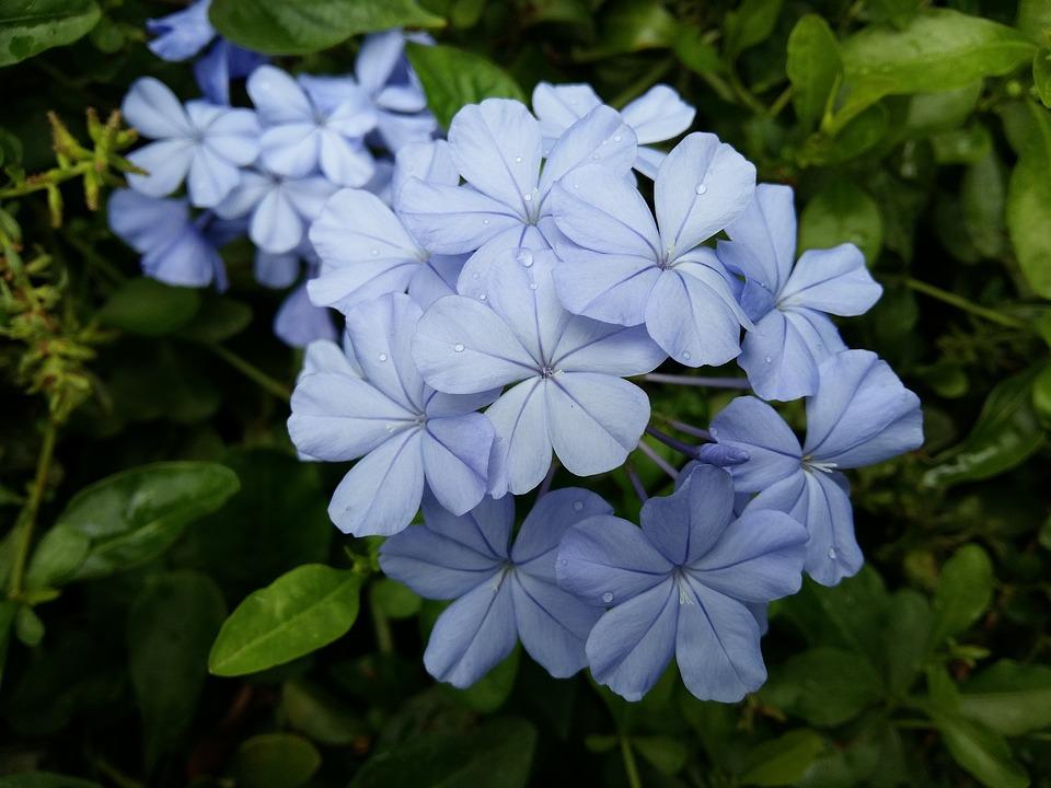 ความหมายของพวงหรีดดอกไม้สดแต่ละโทนสี