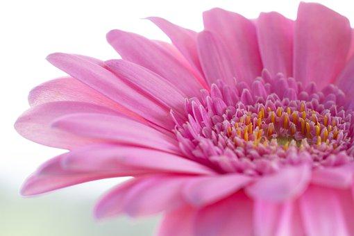 ความเป็นมาของพวงหรีดดอกไม้สด