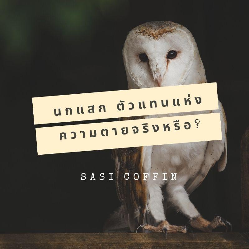นกแสก ตัวแทนแห่งความตายจริงหรือ ตามความเชื่อสมัยโบราณเกี่ยวกับนกแสก เป็นกผี เมื่อพบเจอที่ไหนจะเกิดเรื่องอัปมงคลวันนี้เราพามาหาคำตอบกันค่ะ