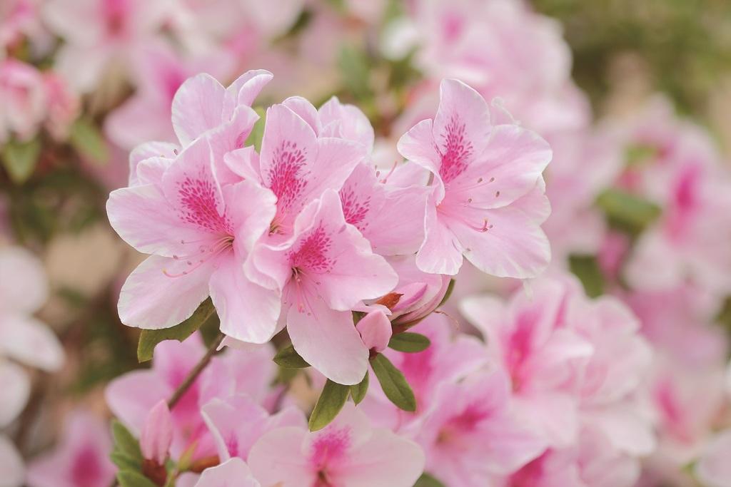 พวงหรีดดอกไม้สดไว้อาลัยโทนสีชมพู